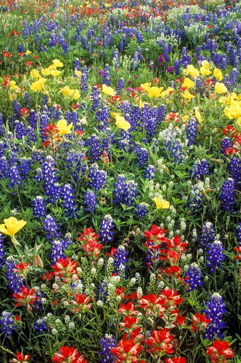 TX flowers 3
