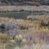 wide shot pond.jpg