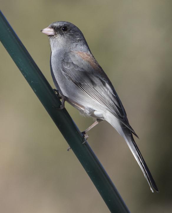 Unknown bird need ID.jpg