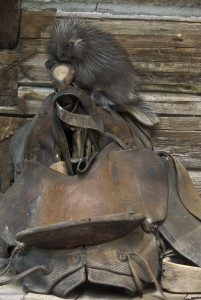 porky-saddle