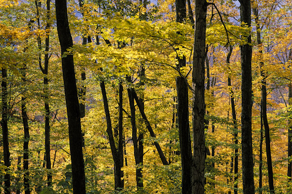 Photographing Fall Color