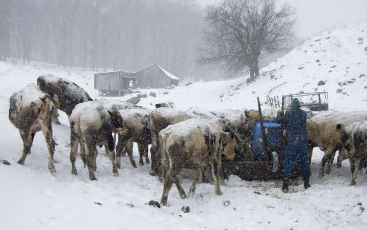 Vermont Diary Farm