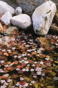 fall leaves water