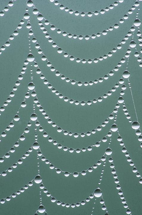dew drop web