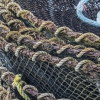 shimp nets-0383