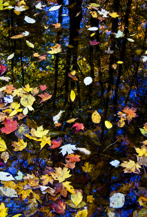 fall water leaves