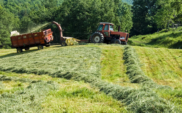 chopping hay