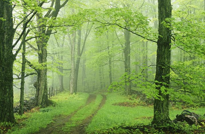 little meadow road