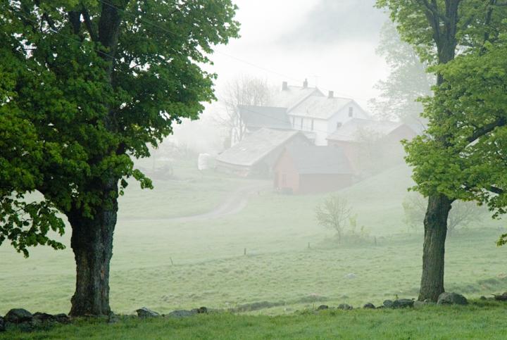 dawn barns