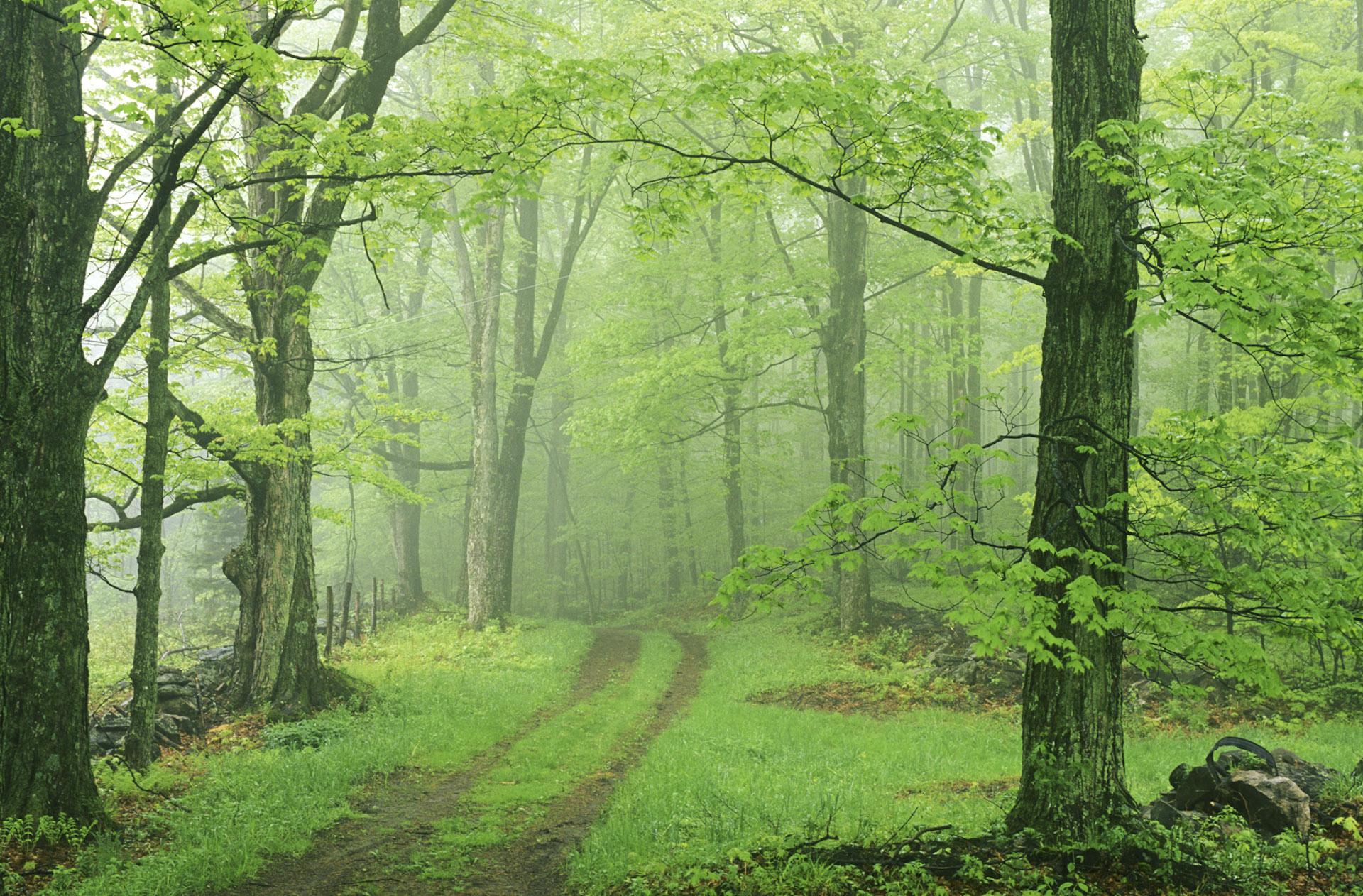 little-meadow-road