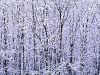 winter-forest-edge