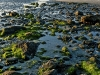 seaweed-sunrise-ll