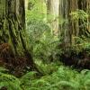 redwood 5