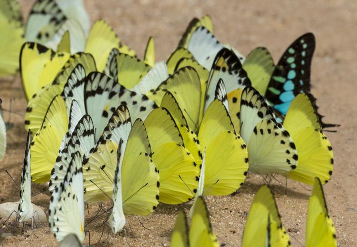 Roadside butterflies