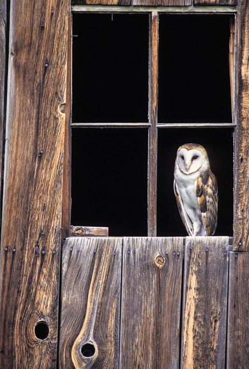 Outdoor Photographer Nature Photography David