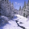winter-moose-river