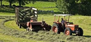 roger-haying-2
