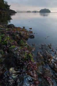 P.R. Nat. Park kelpscape