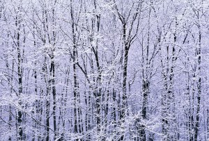 winter-forest-edge