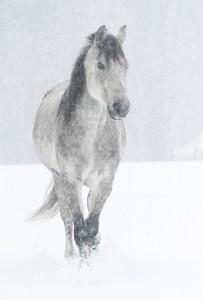 Riva in Blizzard