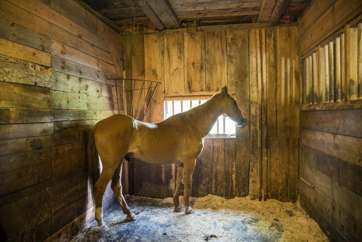 Equine Rescue04