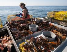 Lobstering Life